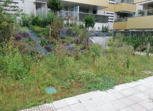 mejora jardin vizkaia antes