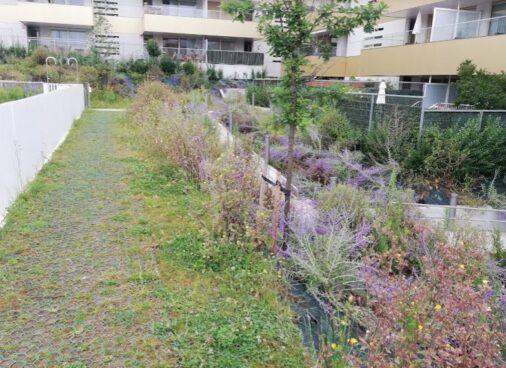 trabajo de jardineria en Algorta - antes